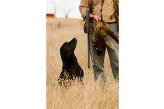 Black Labrador -- Good boy!