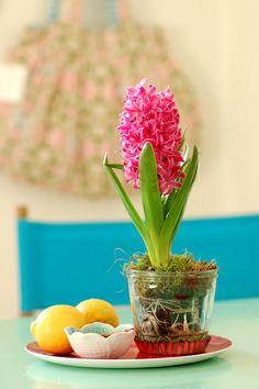 Magenta hyacinth   Flickr: partage de photos!