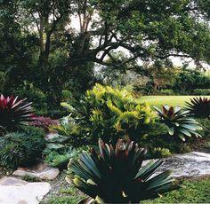 Landscape Design Alcantarea rubra These are great landscape plants, also Alcantarea Silver Plum