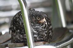 Juri MV - Freelance photographer | Animals and Birds