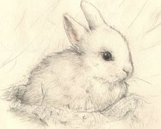 sweet pencil sketch ~