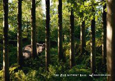 Landscape and Animal Park Goldau: Bear