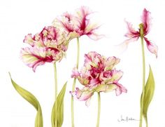 Parrot tulips by Jan Harbon - tattoo inspiration.