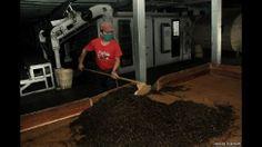 51 - El té producido en la región es procesado y manufacturado en fábricas en Darjeeling, antes de ser enviado a otras partes de India y exportado a todo el mundo.