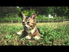 "Lil BUB Goes to the Park.  BUB is a ""perma-kitten"", which means she will stay kitten-sized and maintain kitten-like features her entire life.  She is a dwarf, has no teeth, is polydactal, and is just a special little girl."