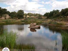*Vivencia Dehesa, finca Valdepajares de Tajo*  al norte de #extremadura  www.vivenciadehesa.es #ecoturismo #birdwatching #biodiversidad #ecosistemas #AgriculturaRegenerativa  #dehesa #cáceres #seppholzer