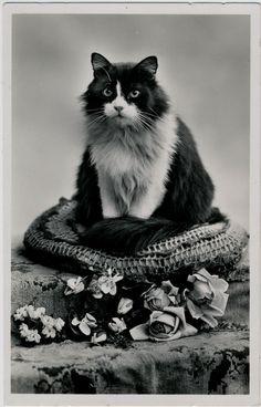 Lovely cat portrait with roses, 1933