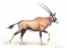 Oryx (aka Gemsbok) Antelope - watercolour and ink Animal and Wildlife Subjects Horse Coloring Pages, Nature Journal, Watercolor And Ink, Mammals, Illustration Art, Illustrations, Moose Art, Character Design, Wildlife