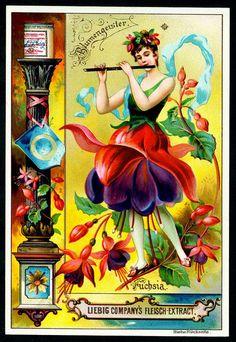 "Liebig S445 Flowers Girls 1895 #4   Liebig Beef Extract ""Flo…   Flickr"