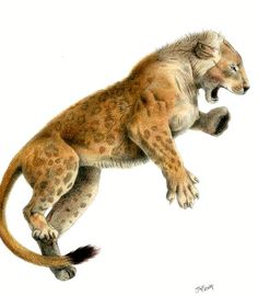 This is an ice age megafauna cave lion it was the enemy of the short faced bear