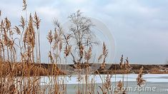 winter-landscape-frozen-lake-foreground-reeds-background-lonely-tree Winter Landscape, Nature Photos, Lonely, Frozen, Fair Grounds, Travel, Viajes, Feeling Alone, Trips