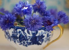 Cornflowers in a blue and white cup.