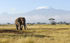 If you have always dreamed of an African Safari on the plains of Kenya, this luxury vacation tour is a must. Learn more about the exclusive benefits of Inspirato's tours. Best Honeymoon Destinations, Mount Kilimanjaro, African Safari, East Africa, Ultimate Travel, Nature Animals, Wild Animals, Day Tours, Travel Pictures