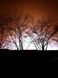 Saturday sunset — #ipadgraphy #nature #photography #sunset #saturday #trees • MyajaTani on Streamzoo