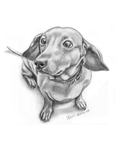 Dachshund Graphite Drawing, Pet Portraits from Photographs Dachshund Funny, Arte Dachshund, Dachshund Love, Daschund, Dachshund Zeichnung, Dachshund Drawing, Weenie Dogs, Doggies, Graphite Drawings