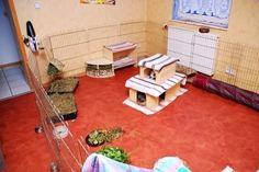 pin von xlxnx auf kaninchen pinterest einrichtung kaninchen und kaninchengehege. Black Bedroom Furniture Sets. Home Design Ideas
