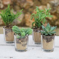 Succulentes avec pot en verre personnalis aux pr noms des for Plantes acheter ligne