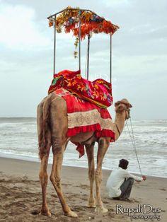 The Horizon - let's take a camel ride!