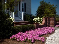 Beds of bubblegum-colored petunias greet visitors at the entrance to brick landscape walls. Compact Japanese holly hedges extend beyond the walls to create an inner planting area, filled with seasonal shrubs and plants, including Natchez Crape Myrtle underplanted with Big Blue Liriope.
