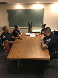 This is adorable! Next up we discuss safety and what to do with abandoned sausage rolls. Military Working Dogs, Military Dogs, Police Dogs, German Shepherd Dogs, German Shepherds, I Love Dogs, Cute Dogs, War Dogs, Dog Memes