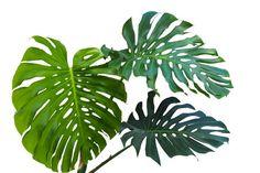 Image result for leaf silhouette split leaf
