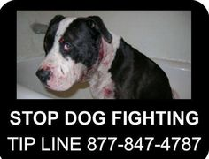 We can all make a change. If you know of someone who is using animals to fight, or might be, please report them! You will make an animals life so much better!