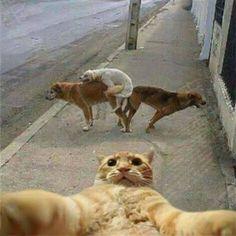 Selfie dog