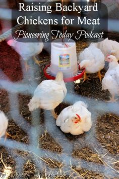 Podcast on raising backyard chickens for meat. Great tips on what to expect, plus a break down on the cost.