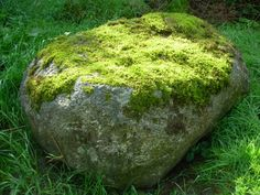 Mossy Rock: throw a handful of moss into a blender with 1 cup of yogurt or  buttermilk, paint on a shady rock (I'm sick of snow - I NEED GREEN)