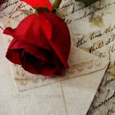 Love letters and a red red rose