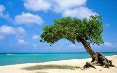 Sorprendente e felice Aruba - Mondo - In Viaggio - ANSA.it