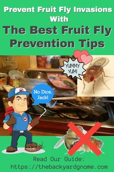 Here is our complete list of traps and methods for getting rid of fruit flies for good, plus a lot more info about fruit flies than anyone needs to know. Fruit Flies, Fly Traps, Gone For Good, Best Fruits, How To Get Rid, Bugs, Beetles, Insects