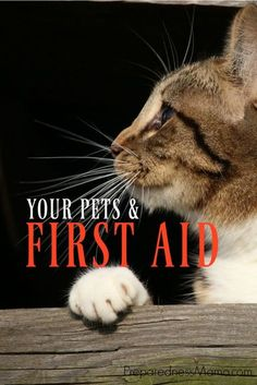 It is important to know how to take care of your pet during emergencies. Knowing pet first aid techniques may save you money and even save their life | PreparednessMama