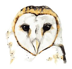 Barn Owl Watercolour Painting By Katrina Sophia
