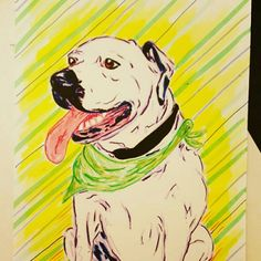 Loving the new year and all the beautiful pups that have joined the Truly Truman portrait family :)