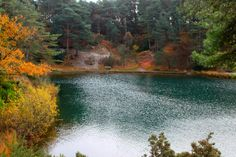 Autumn colours. Blue Pool, 16 November 2016