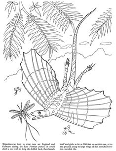 Dinosaurs Discovery Kit colouring sample pages @ Dover Publications Coloring Pages Nature, Dinosaur Coloring Pages, Truck Coloring Pages, Adult Coloring Pages, Coloring Sheets, Coloring Books, Dinasour Party, Dino Drawing, Dinosaur Discovery