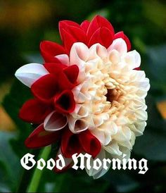 good morning flower wishes Good Morning Cartoon, Good Morning Gif Images, Good Morning Animation, Cute Good Morning Quotes, Good Morning Cards, Good Morning Greetings, Morning Pictures, Good Morning Wishes, Morning Morning