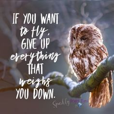 If you want to fly, give up everything that weighs you down.  Owl image- quote about flying. #flying #owls #quotes   #sparklybrighteyes
