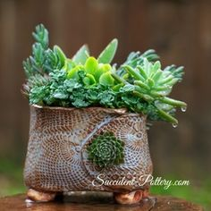 """NEW** """"Button Hole Pottery"""" Succulent-Pottery.com unique design to adorn the pot with bursts of succulents.  Adding texture and interest by adding more succulents to your arrangement."""