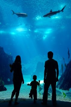 Aquarium of the Pacific in Long Beach, CA - under $20 on our site!