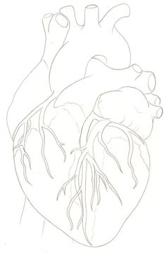 ... Heart Ideas Human Heart Anatomic Heart Tattoo Anatomical Heart Art