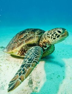 Sea turtle, The Ocean Is Wonderful Sea Turtle Pictures, Animal Pictures, Cool Pictures, Beautiful Creatures, Animals Beautiful, Cute Animals, Beautiful Beautiful, Cute Turtles, Sea Turtles