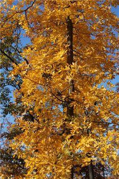 Ohio Fall Color