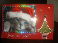 Chat Noël ...