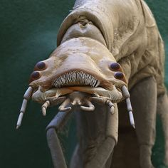 Forget about the bogeyman in the cupboard or the monster under the bed. These creepy crawlies really might be in your house (or nearby, at least), so enjoy these coloured scanning electron micrograph portraits ... if you dare.