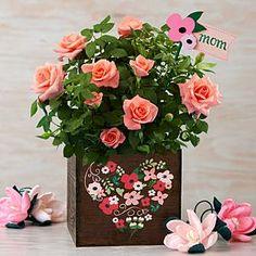 Mom's Rose Garden. get ProFlowers Promo Codes