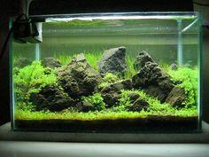 Beautiful Aquascapes Gallery | Aquaec Tropical Fish