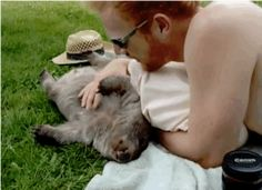 A wombat loving belly rubs?- Way too cute and makes me wish I had a dog to give give belly rubs. It's not the same animal, but I too want to give it so much love