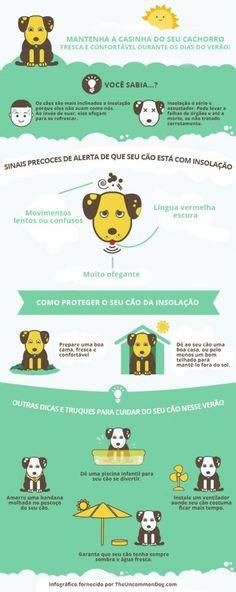 Como proteger o seu cão da insolação